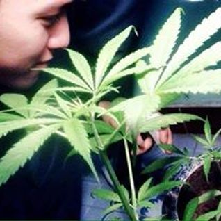 Mixtape - Smoke Weed - Leonardo Mix