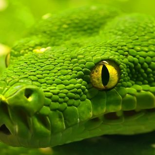 The Emerald Snake