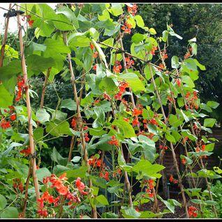 ...something a little bit different -  organic farming & heatwave dehydration - Sun 14th Aug 2016