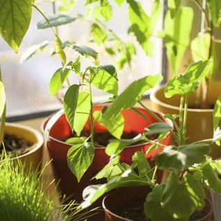 Plantes, inondations et botanistes