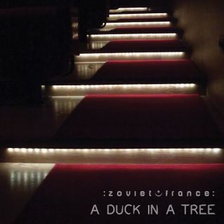 A Duck in a Tree 2014-04-26 | A Perforated History