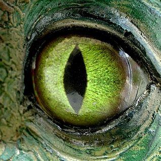 NCN - Dinosaurs