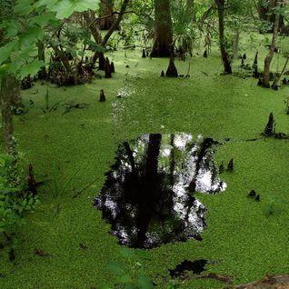 OSP - Swamp Life