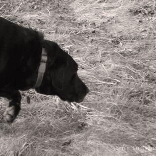 Deep/Tech House - The Lunch-dog Vol. 2 (30min)