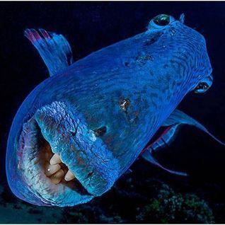 The Jack`s Mariners - Fishing into the Deep Sea (Mastering by Eduardo Sormani)