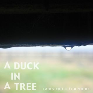 A Duck in a Tree 2013-05-25 | Before and After Silence