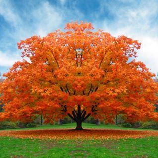 sul ramo dell'albero