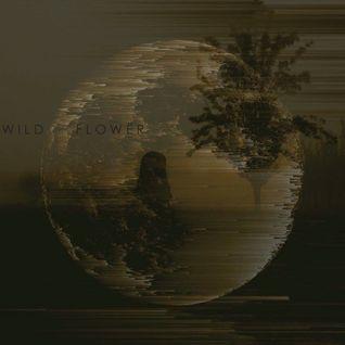 Wild Flower'
