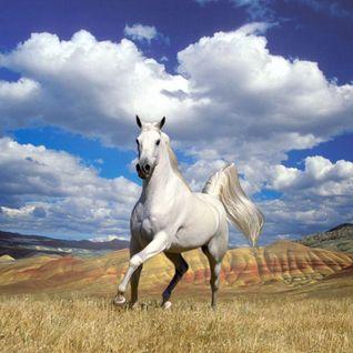 Bronco Horseplay Set - April 2012