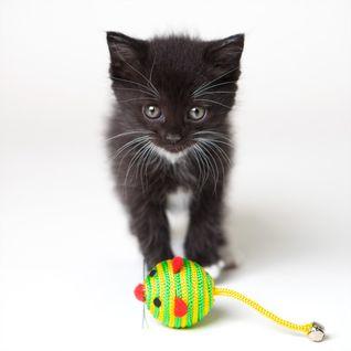 Die Kitten Tape 24