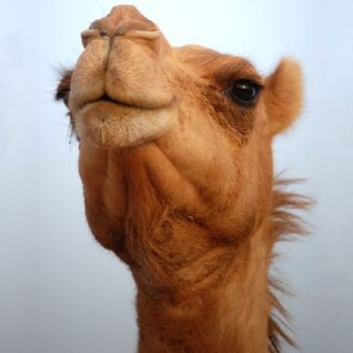 Martine Get On My Camel mix