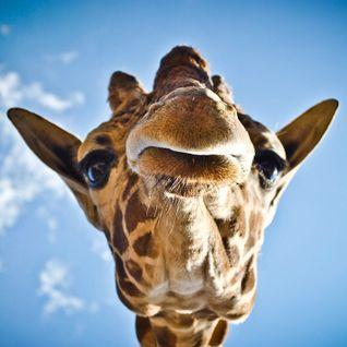 Giraffe Mix