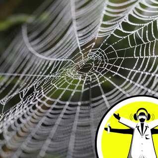 Why don't spiders get stuck on their webs?