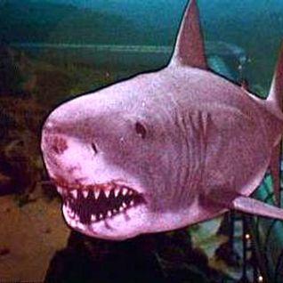 LORENZO + PIERO + ALESSIO = JAWS