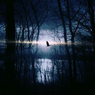 The Nightbird - Reflections