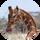 CheesyGiraffe