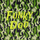 Funky Doo