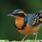 Mystery Bird Soundsystem