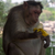 monkeyorbanana