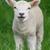 Ondřej Sheepa Peška