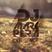 DJ MARK PERA - Deepsence Sessions #3