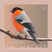 Chromacast 50 - Placebo eFx