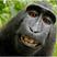 Monkey Music Movement Sendung #20 20.09.12