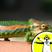 What Colour is a Dead Chameleon?