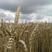 Romitronic - Way Across a Meadow 2009