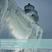 Phonons Seasonal Winter 2013 by Philippe Lopez