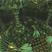 Hive Radio - 12.18.16 - Axion, JustElmo, Stickee, Techsmith
