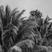 Island Mixtape 02