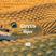 GUYUS - Viper (bassmusik010)