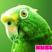 John McCririck's Left Handed Parrot - 13/02/2013