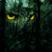 Follow the Owls
