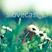 Slovecast #02 Summer Mix by Splase  (29.07.11)