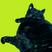 Die Katze aus Duisburg Nr. 09