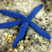 Andy Harkin - Big Blue Star 3