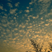 plicploc - gazoullis et friselis (2016) (Musiq'3)