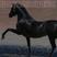 Pferdestärken Nr. 07