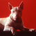 LE FILM DU DIMANCHE SOIR #17 : Baxter