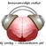DJ CORBY - BRAINSMUDGE 24TH JUNE 2014 - UKHARDCORE