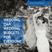 062: Wedding Q&A #moneyweek - Wedding Budgets for everyone