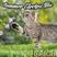 badcat's Summer Electro Mix