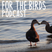 For the Birds Podcast - Episode 08 - Birds and a Changing Planet (May 4, 2020)