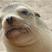 January sea lion blues