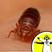 Bed Bug Biology
