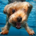 The Deep End 7: Doggy Paddle
