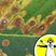 Plant Pests and Plant Pathology