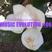 MUSIC EVOLUTION #06